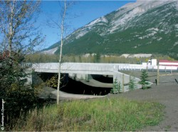 Conservation Value of Wildlife Crossings: Measures of Performance and Research Directions