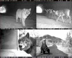 Banff Wildlife Crossings Project: Integrating Science and Education in Restoring Population Connectivity Across Transportation Corridors