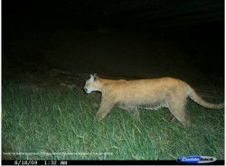 I-70 Monitoring and I-70 Wildlife Watch Report