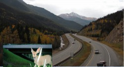 I-70 Eco-Logical Project Final Report. A regional ecosystem framework for terrestrial and aquatic wildlife along the I-70 Mountain Corridor in Colorado: An Eco-Logical field test