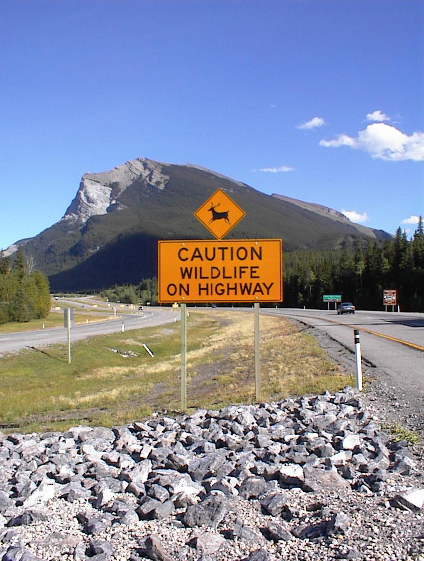 Banff National Park Caution Sign_Patricia White