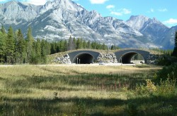 Banff Crossing Structures