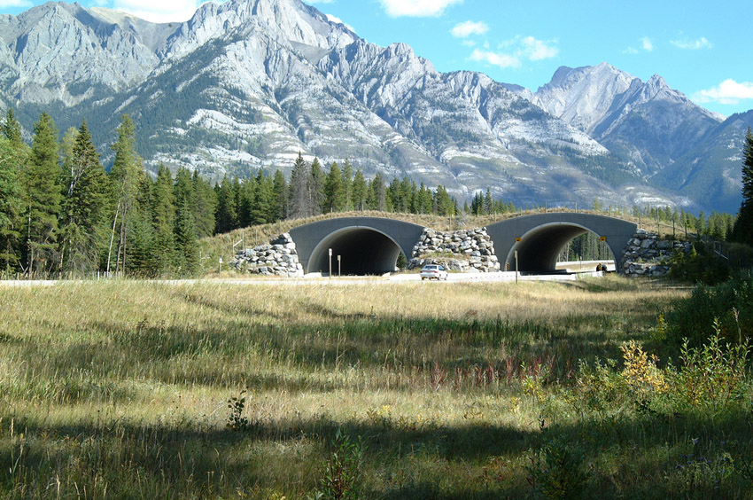 New Solutions Wildlife Crossing Structures Arc