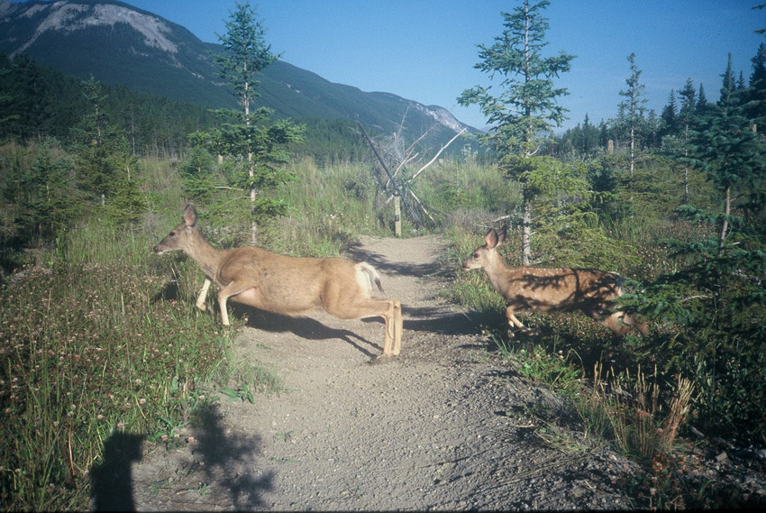 Deer_Crossing_trail