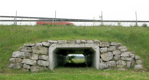 Wildlife_underpass_Switzerland