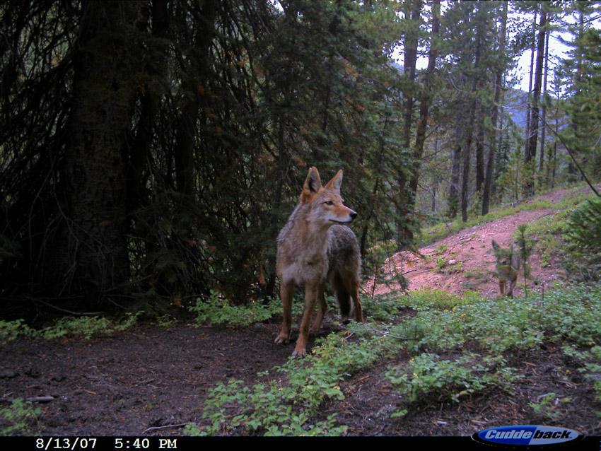 Wolf_Trail