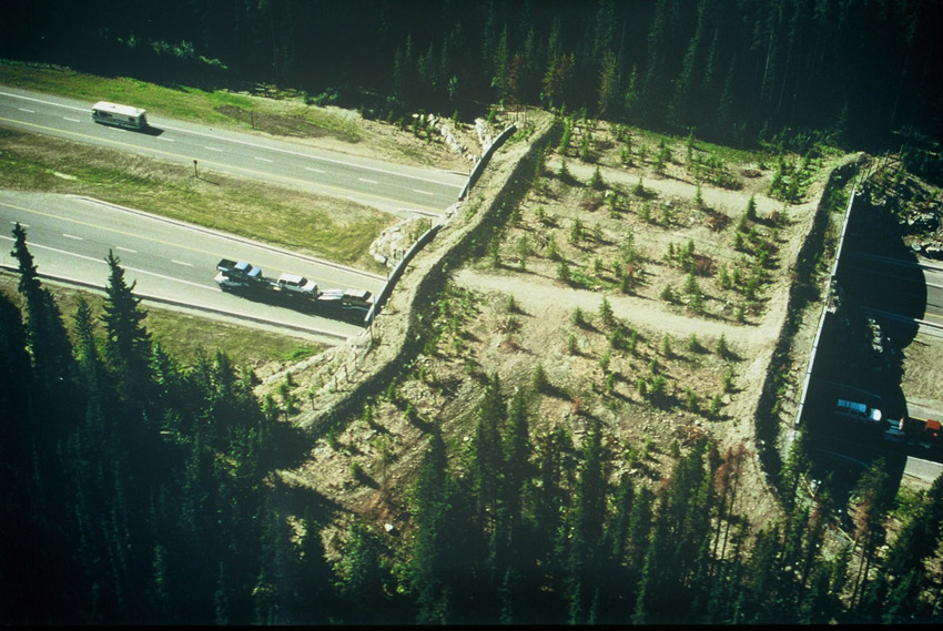 banff_wildlife_crossing_aerial