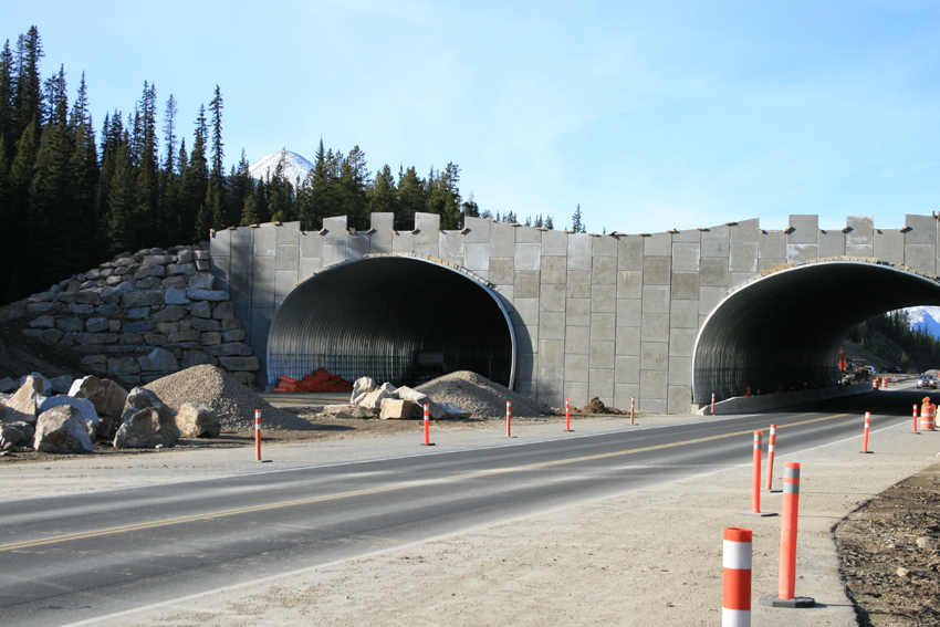 banff_wildlife_crossing_construction