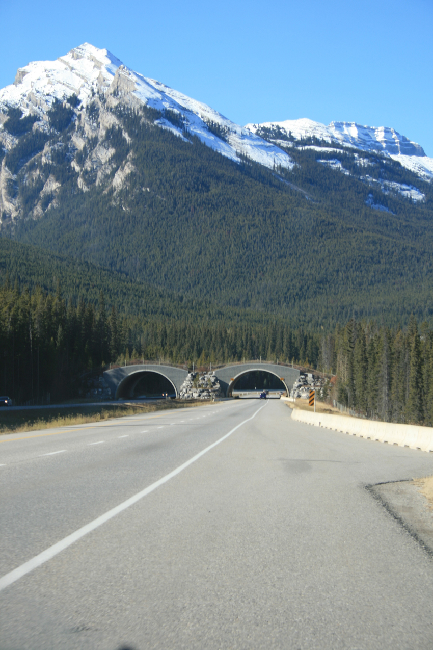 banff_wildlife_crossing_mountain