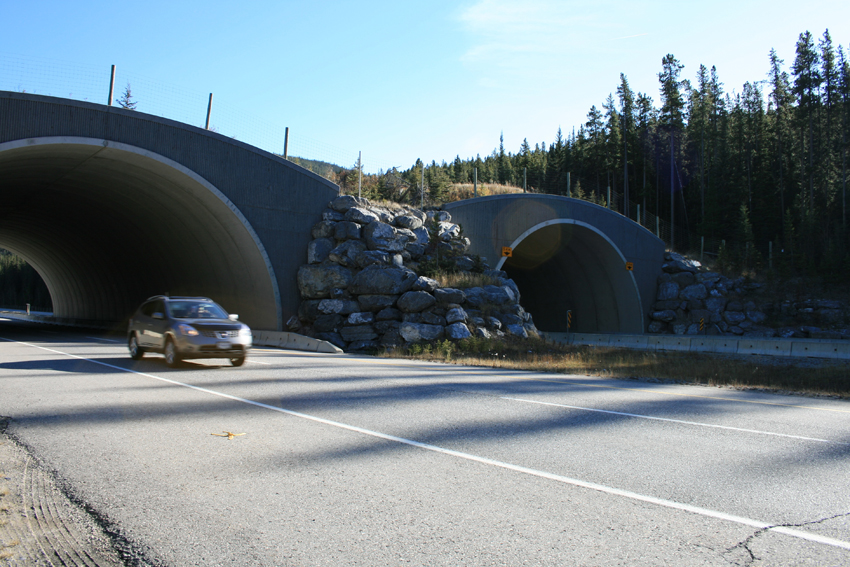 banff_wildlife_tunnels