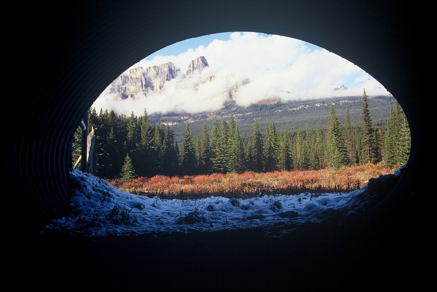 wildlife_tunnel_animal_perspective