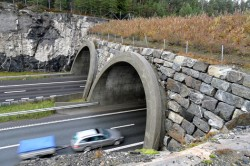 Road ecology: Wildlife crossings and highway design
