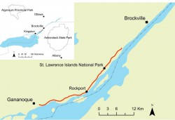 Wildlife Road Mortality on the 1000 Islands Parkway in South Eastern Ontario:  Peak Times, Hot Spots, and Mitigation Using Drainage Culverts (Master's Thesis)