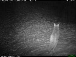 ID Highway 21 camera trap photos