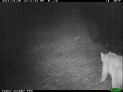 ID Highway 21 camera trap photos