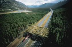 Unusual Bridges For Animals – Wildlife Overpasses
