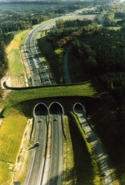 Unusual Bridges For Animals – Wildlife Overpasses