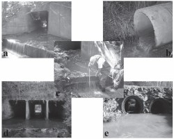 Culverts in paved roads as suitable passages for Neotropical fish species