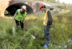 Researchers study Montana wildlife crossings for use on Chinese roads