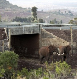Wildlife Crossing Structures:  An Innovative Global Conservation Strategy