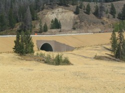 Wildlife Arch Culvert on US Hwy 26/287