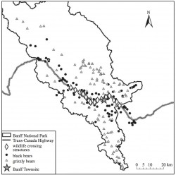Genetic connectivity for two bear species at wildlife crossing structures in Banff National Park