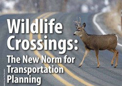 Wildlife Crossings: The New Norm for Transportation Planning
