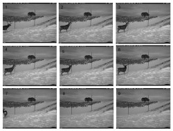 Overpasses and underpasses: Effectiveness of crossing structures for migratory ungulates