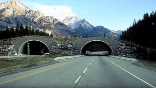 Animal Bridges – Life Saving Wildlife Crossings