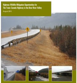 Highway Wildlife Mitigation Opportunities for the Trans-Canada Highway in the Bow River Valley