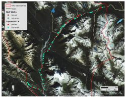 Trans-Canada Highway Yoho National Park: Mitigation and Opportunities Assessment for Wildlife