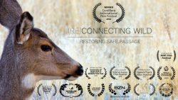 (Re)Connecting Wild – Restoring Safe Passage