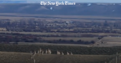 New York Times: How Do Animals Safely Cross a Highway? Take a Look.