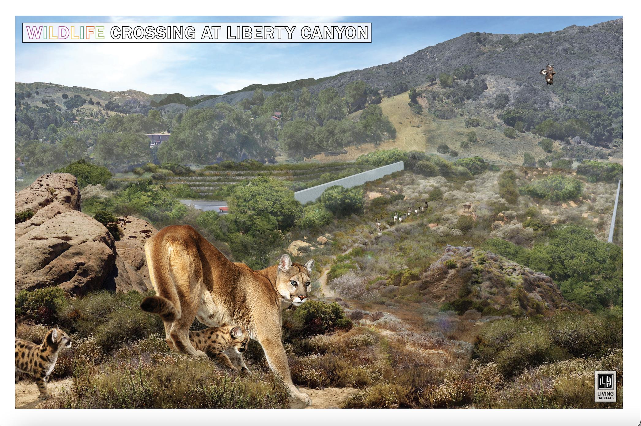 NWF & Living Habitats - Mountain Lion Crossing Image